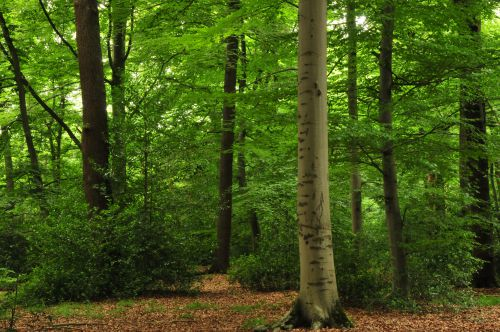 Green deciduous forest