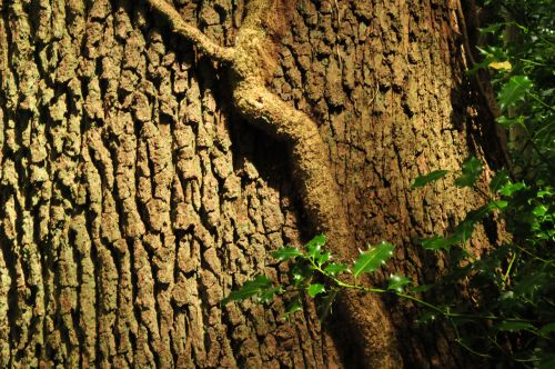 Tree trunk with ivy
